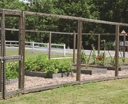 a fenced in garden with vegetables growing in beds on a sunny day at south bowie community center